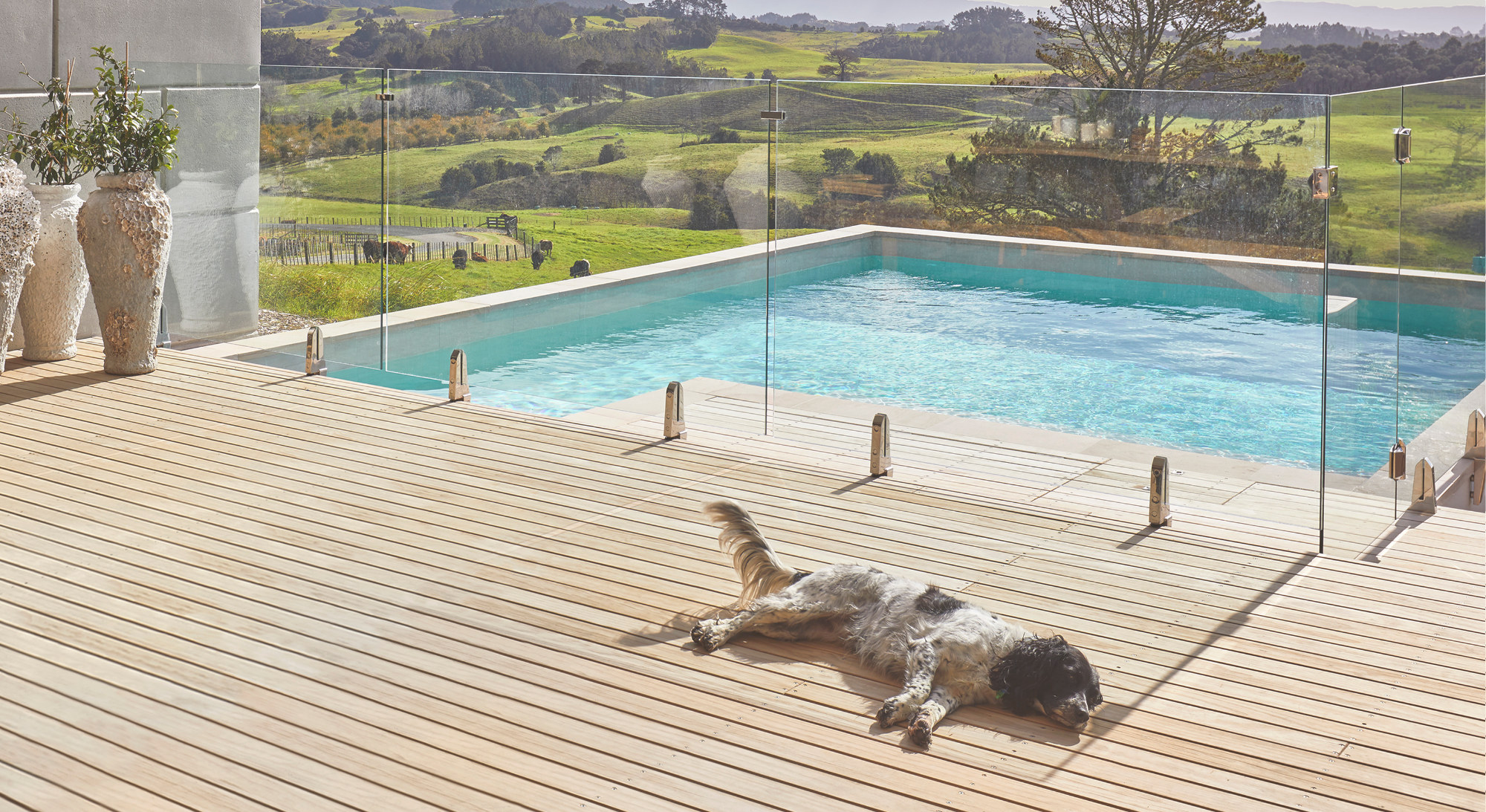 a dog lies on the deck by a pool in front of the rolling hills of the farm estate